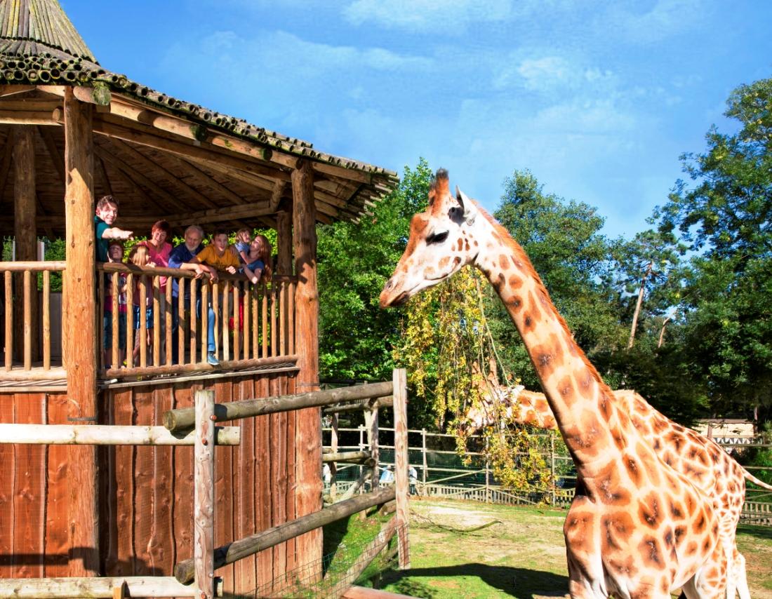 BW Giraffen 14pers