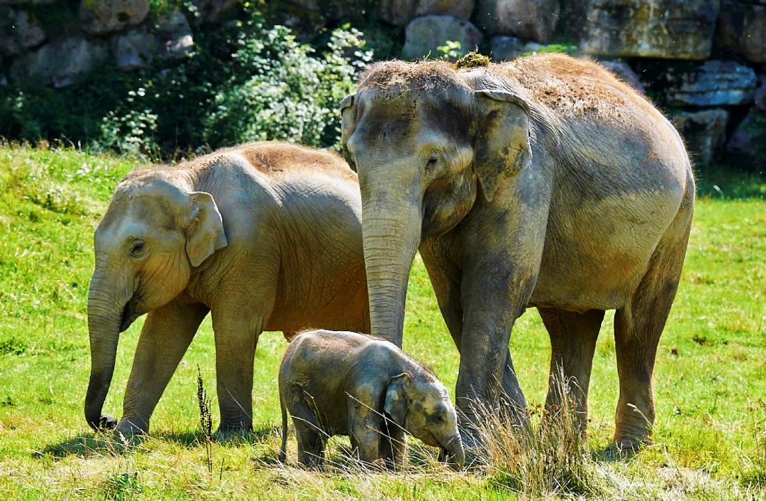 Le Pal Olifanten 15pers