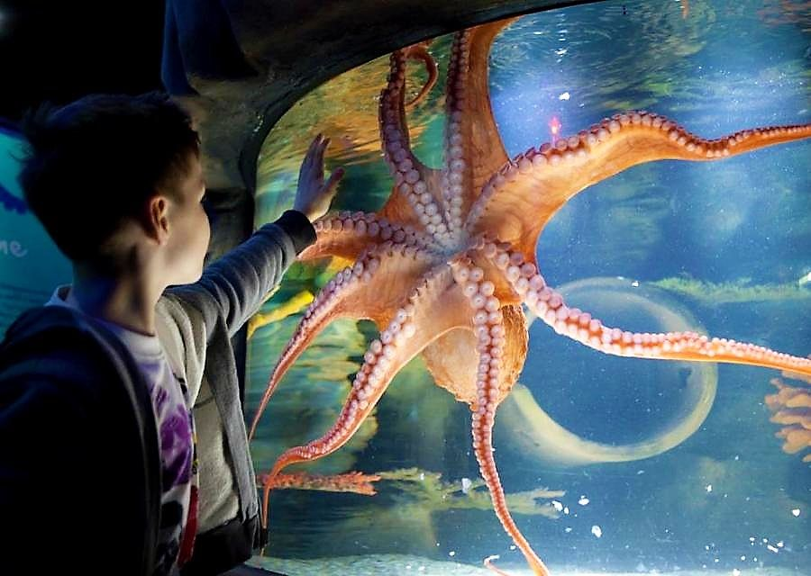 Sea Life - Foto: Merlin Entertainments