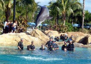 Ontmoeting met dolfijnen in Discovery Cove