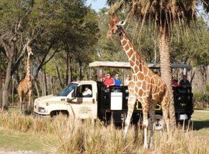 wdw ak wanyama safari