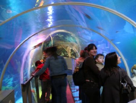 De tunnel in Sea Life