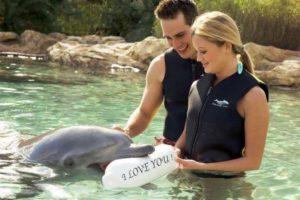 Een dolfijn brengt een liefdesboodschap over in Discovery Cove