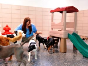 Pet Care in Walt Disney World - Foto: (c) Disney