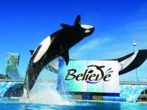 Orkashow Believe - Foto: SeaWorld