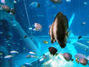 Tropische vissen - Foto: SXC, Bigmike.it