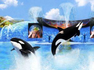 Orkashow One Ocean - Illustratie: SeaWorld