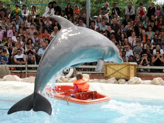 De dolfijnenshow in het Zwitserse Connyland
