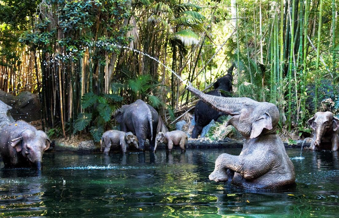Spelende olifanten in Jungle Cruise in Disneyland - Foto: (c) Disney