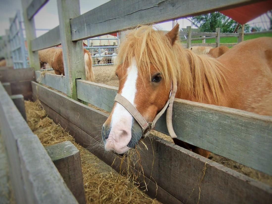 Pony's in Attractiepark Slagharen - Foto: (c) Parkplanet