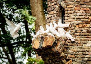 Witte duiven in het Sprookjesbos van de Efteling