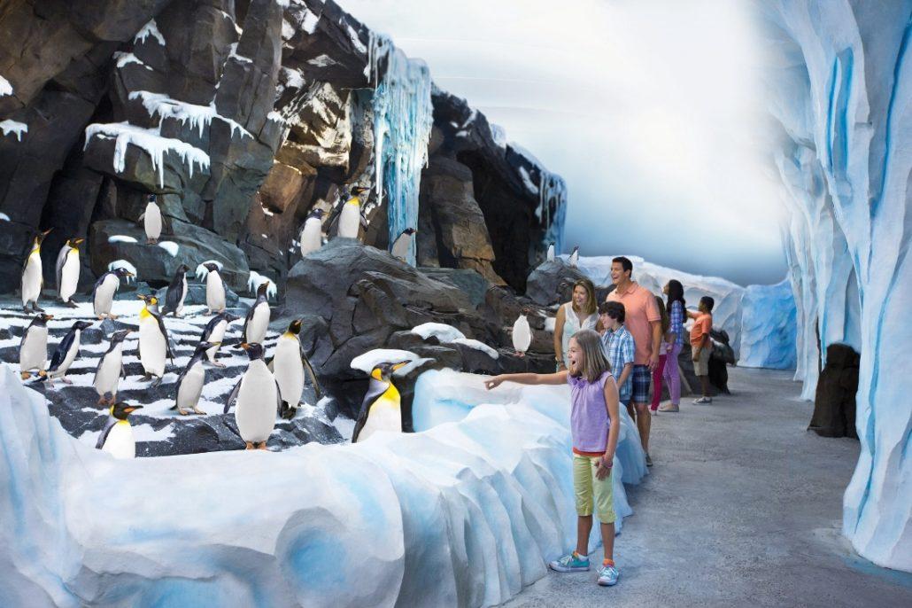 seaworld orlando antarctica pers