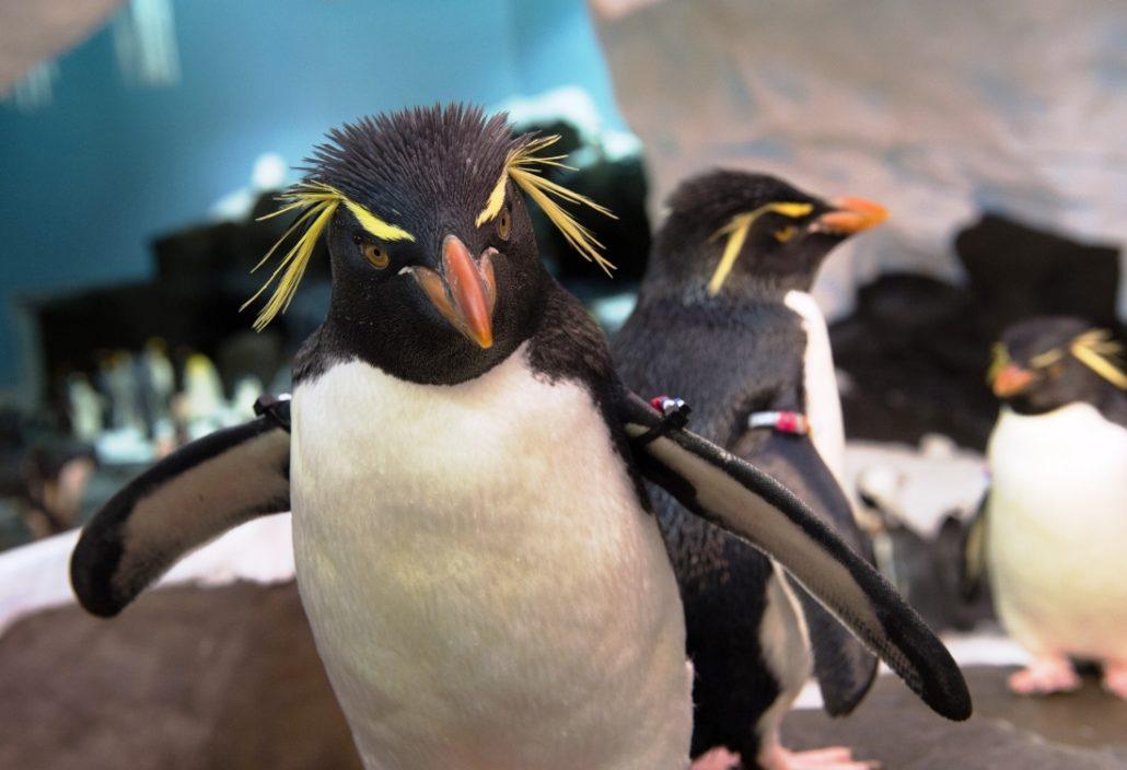 seaworld orlando antarctica pinguins 15pers