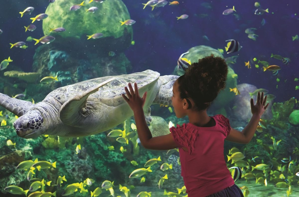 TurtleTrek in SeaWorld Orlando