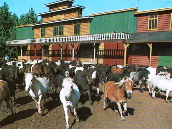 Pony's speelden lang een grote rol in Attractiepark Slagharen