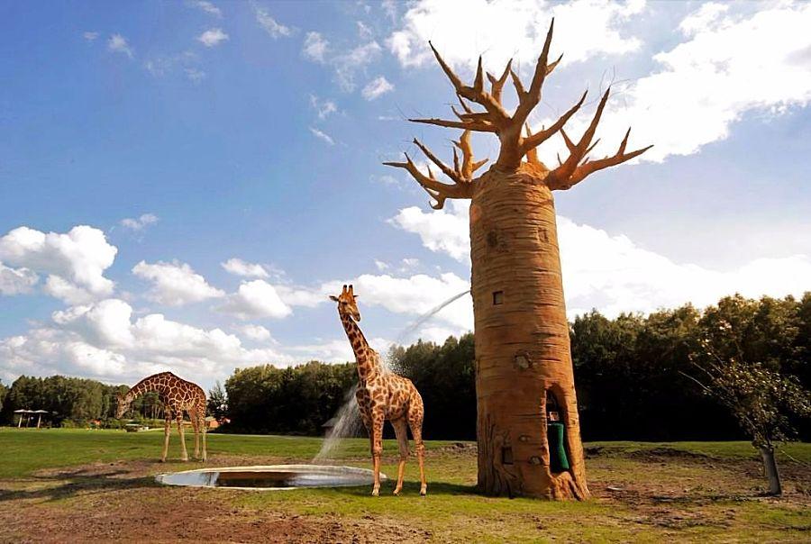 Interactieve baobab in Serengeti-Park