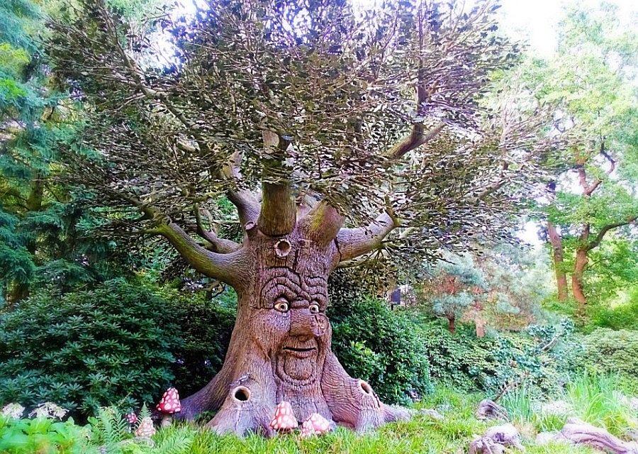De Sprookjesboom in het Sprookjesbos van de Efteling – Foto: © Adri van Esch