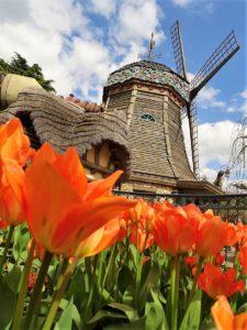 De Disneyland Paris Tulp bij The Old Mill in Fantasyland - Foto: © Adri van Esch