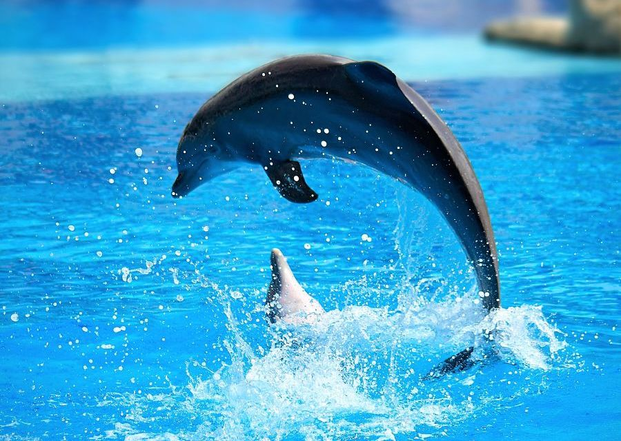 Dolfijnenshow - Foto: Jin Jang (Wikimedia c.c.)