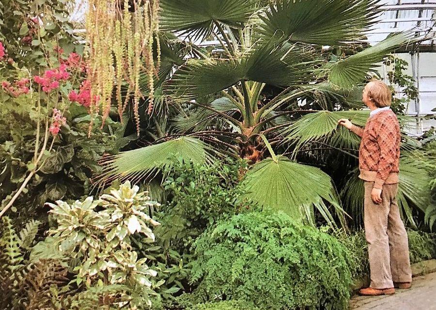 Tropische kas in de voormalige Flevohof